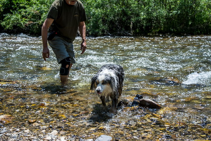 Hiking Big Elk Creek in Idaho, dogs hiking