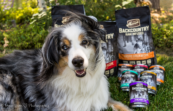 Merrick backcountry dog food review