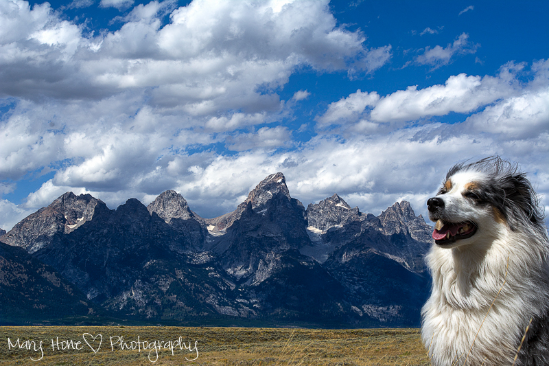Torrey and the Tetons