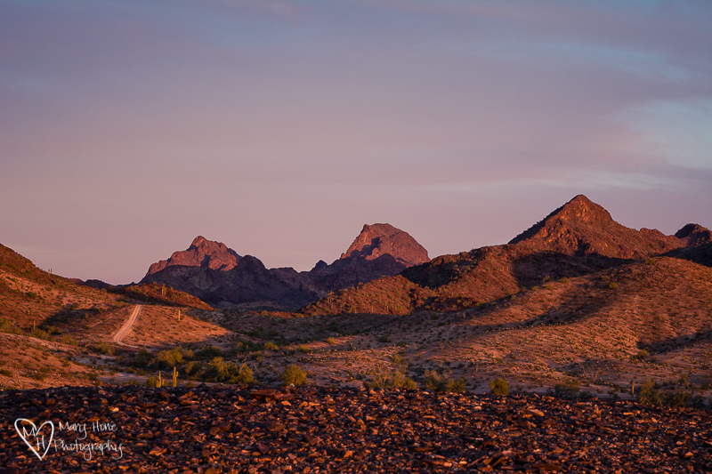 Creatures of Habit. Arizona sunset
