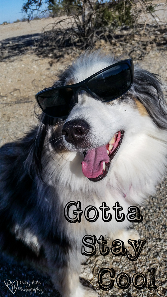 Dog in cool sunglasses