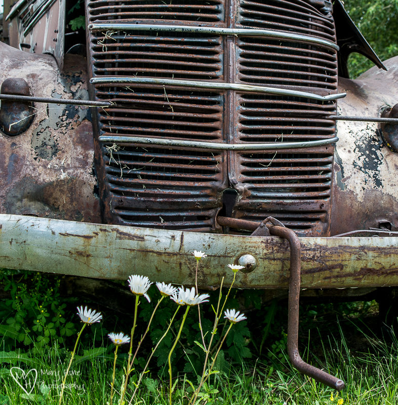 It's in the details. Old truck and daisy's