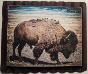 8 x 10 Custom Metal Bison and birds