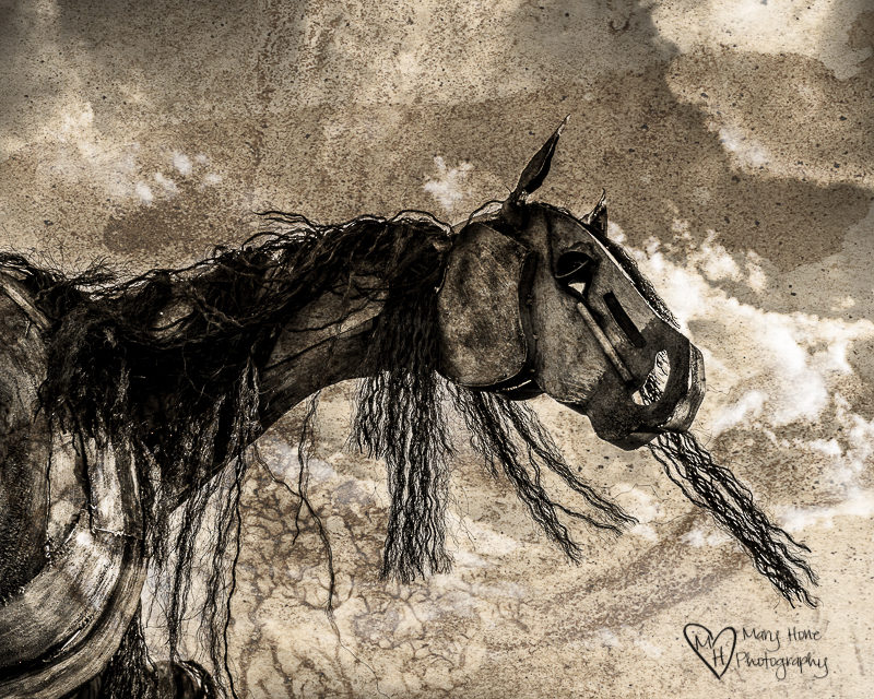 Bleu Horses in black and white