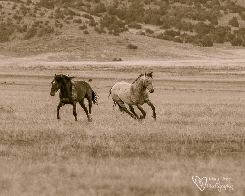 running horses having fun