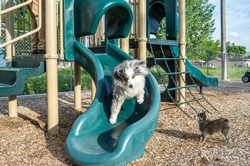Dog on a slide