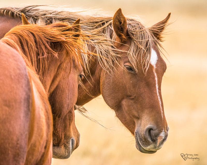 Wild Horse Week-Horses in Art