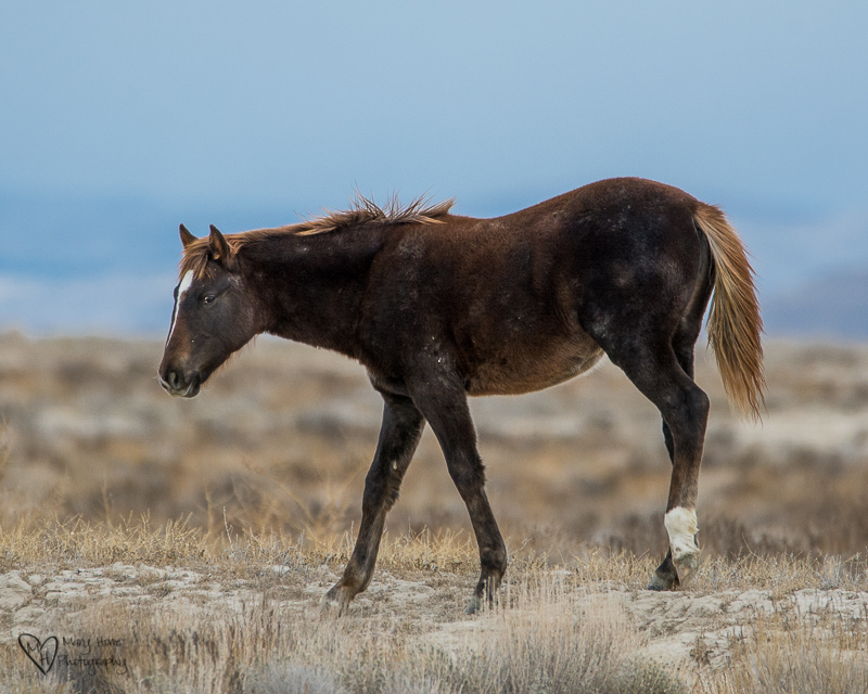 Cute filly wild horse