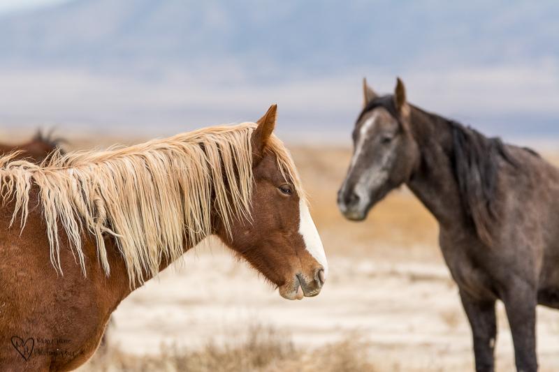 Wild horse mare with blonde mane