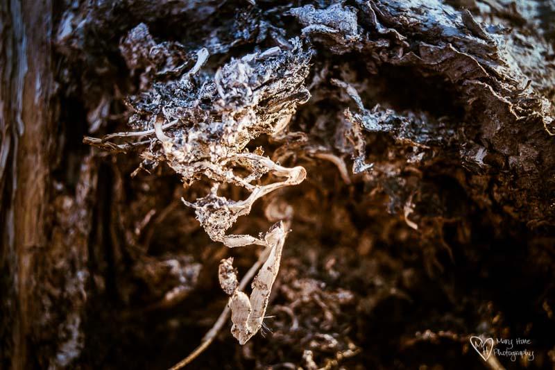 Inside of a dead saguaro cactus