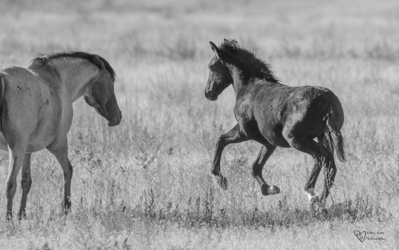 Graceful wild horses