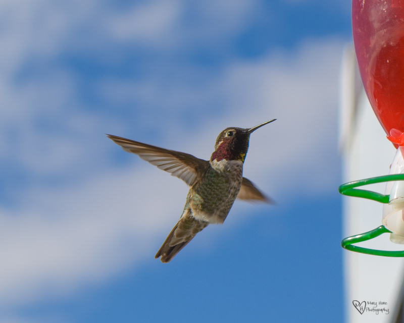 Cute Little Hummingbirds