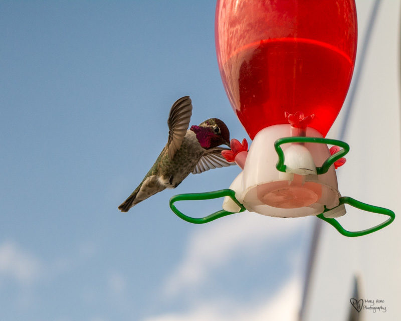 Cute Little Hummingbirds