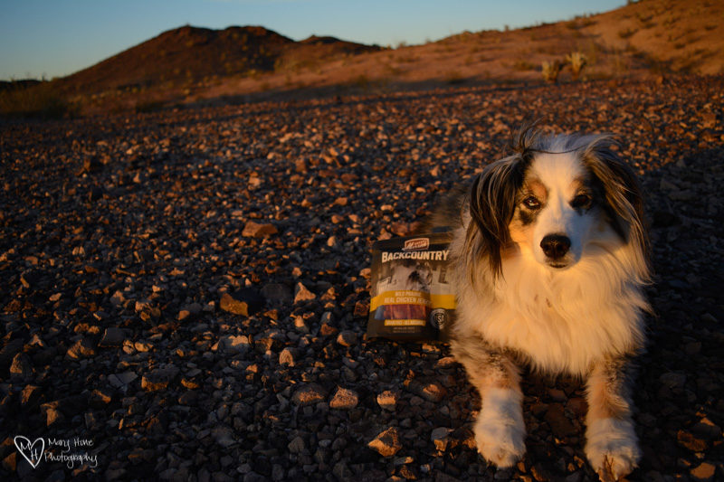 Backcountry Dogs, Deserve Merrick Backcountry Food and Treats