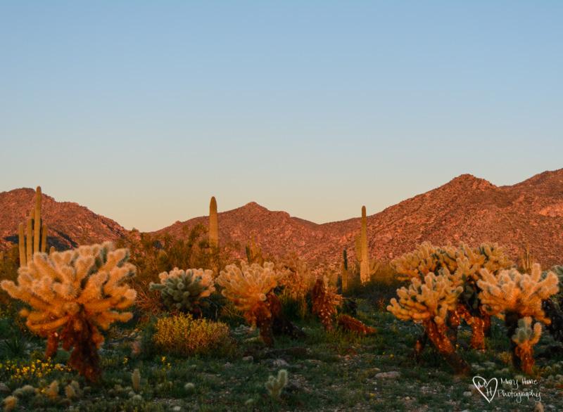 Sunrise cactus