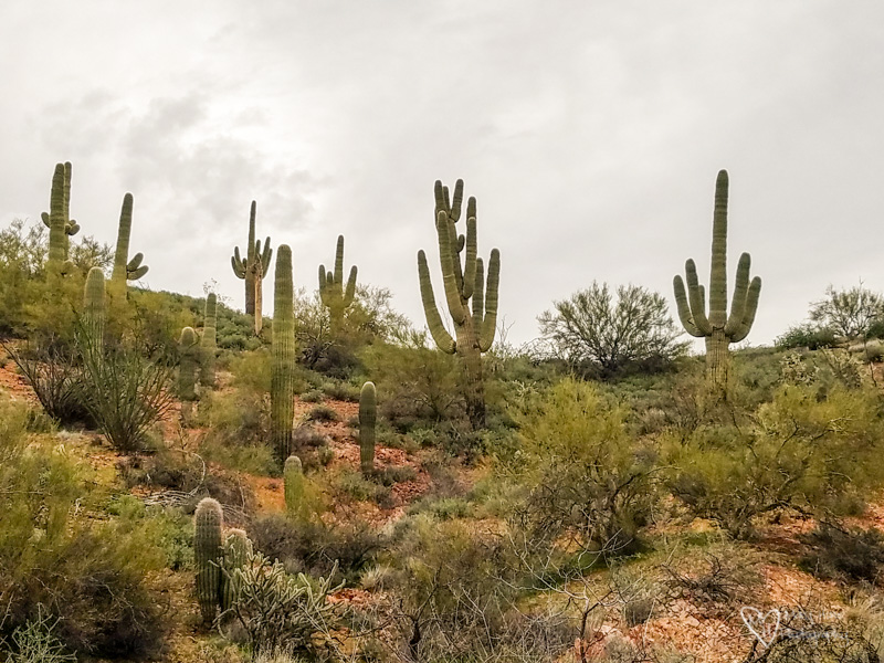 Boondocking Beauty Near Wickenburg