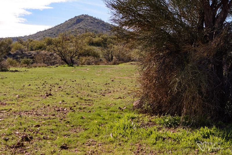 boondocking near wickenburg arizona