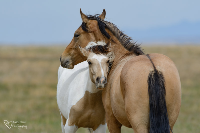 wild horse pair, Nothing Like a Little Wild Horse Therapy