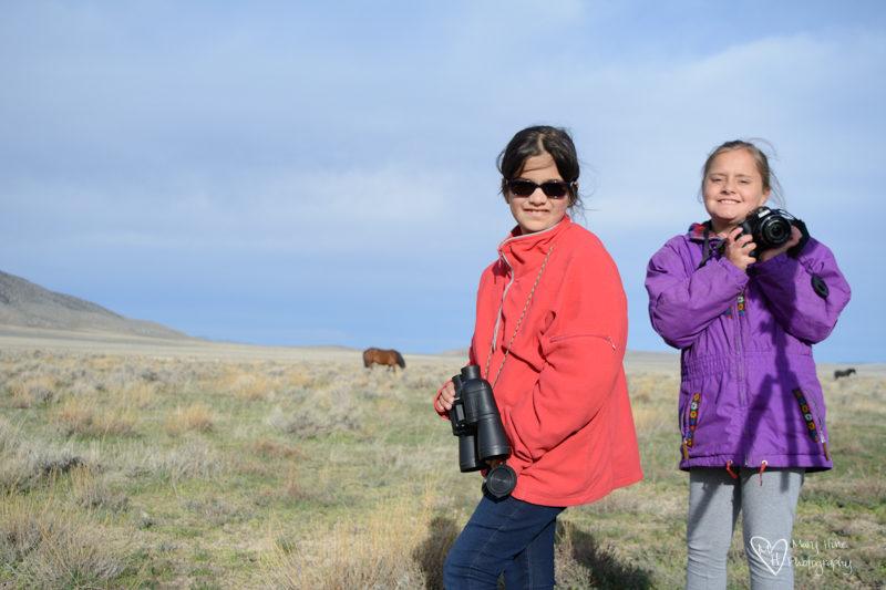 taking photos of wild horses