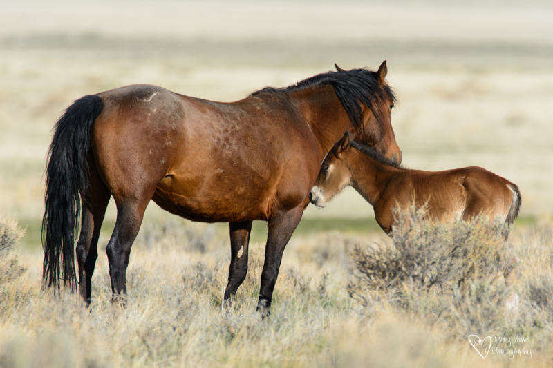 wild horse mom and baby