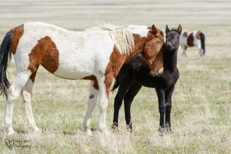 two wild horse siblings