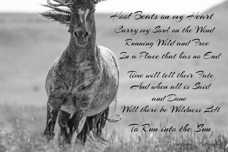 hoof beats on my heart, wild horses