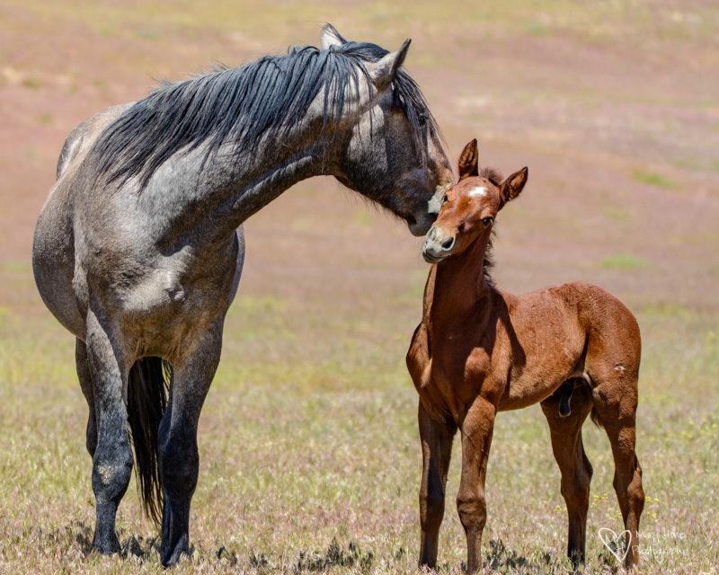 Wild Horse Foals, colt