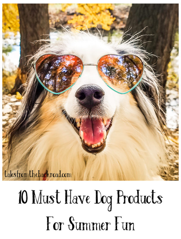 10 must have dog products for summer fun