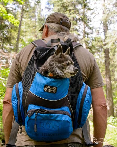 outward hound back pack dog carrier
