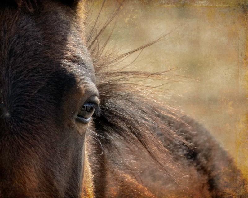 eys to the soul wild horse