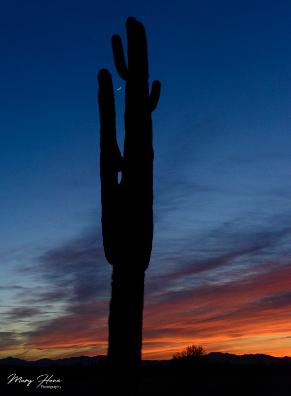 new moon, cactus, sunset