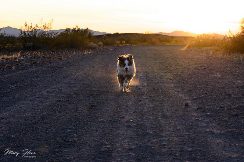 Torrey running