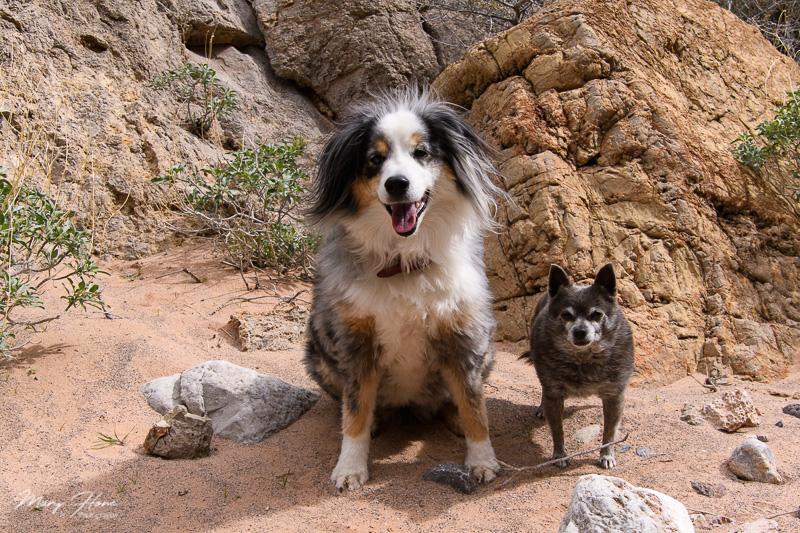 Boondocking at Lake Mead, hiking