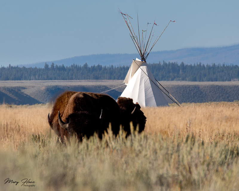 focus stacking, bison and tipi