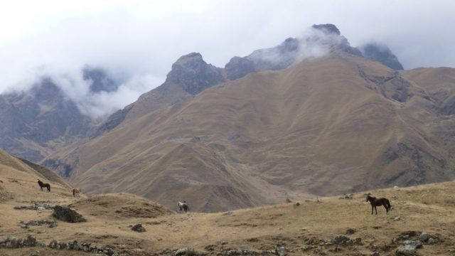 Mountains and horses on the trek to Machu Picchu