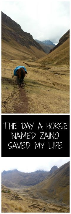 The Day a Horse Named Zaino Saved My Life