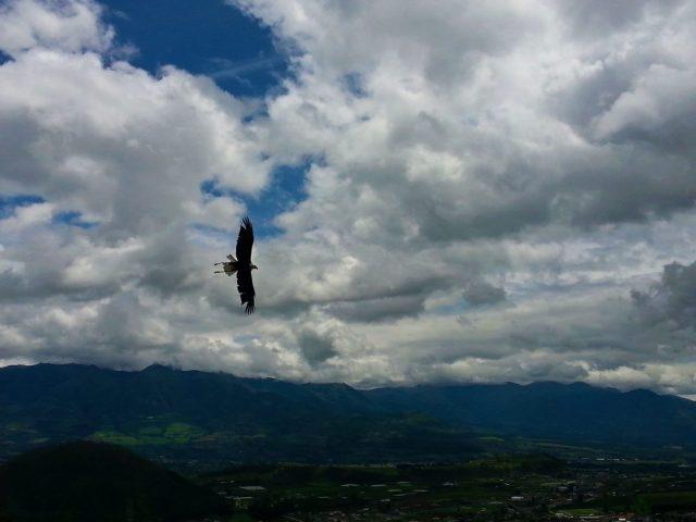 Parque Condor Bird Park in Otavalo Ecuador