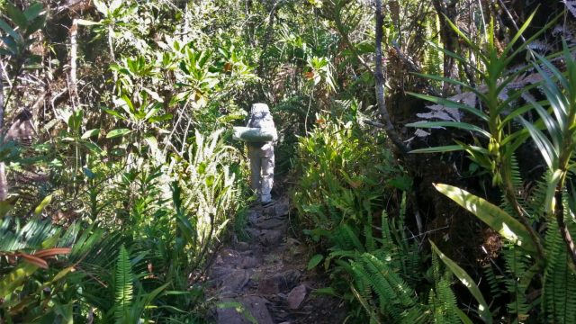 The dry landscape turned to lush forest as I hike with my pack to Roraima Venezuela
