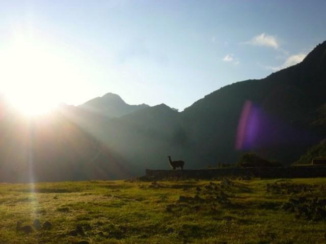 Llama & rays of sunshine at Machu Picchu