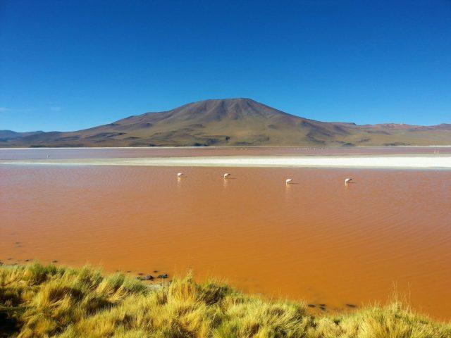 Backpacking Bolivia - Uyuni Salt Flats: El Salar de Uyuni Tour in Bolivia - La Laguna Colorada