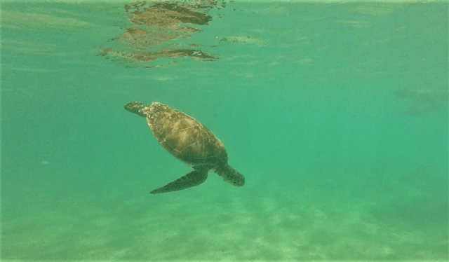 Snorkeling with turtles in Akumal - what to do in Tulum Guide