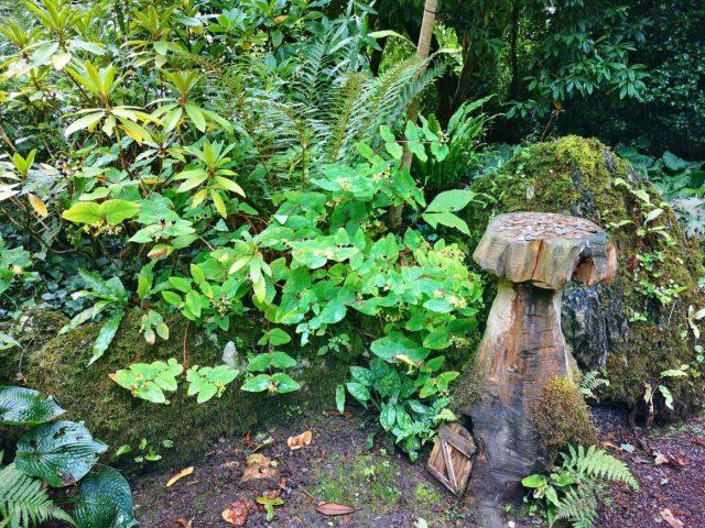 Blarney Castle Gardens Fairy Glade - Spot the Fairy House! - Blarney Castle Tour