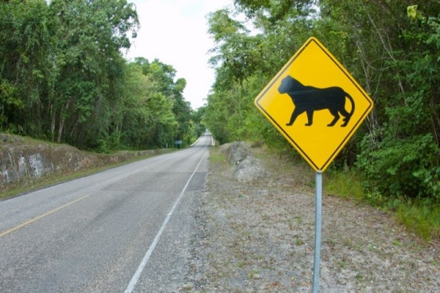 This jaguar crossing sign brought me fully awake on our ride! Cancun excursion to Coba