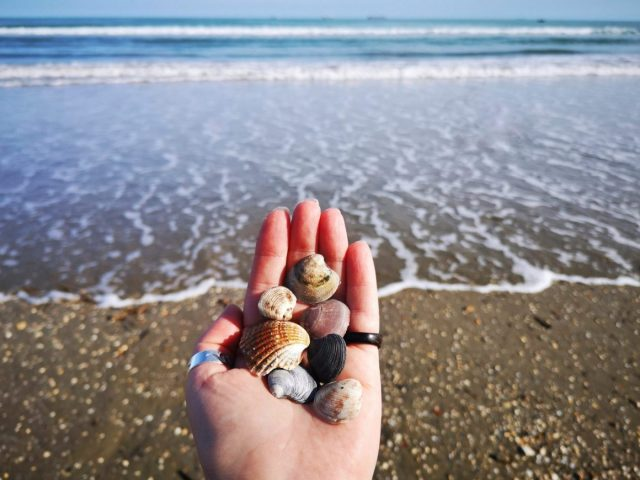 Spend a Day By the Beach in Lido - Hand holding shells on Lido Beach in Venice