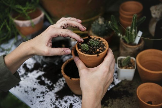 Some work exchange programs involve manual work like gardening - hands filling in a plant pot with soil