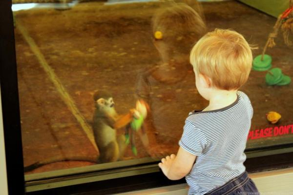 Promised Land Zoo (4)
