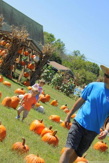 pumpkin patch (15)