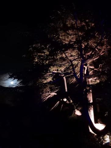 Night in the Garden, 2014