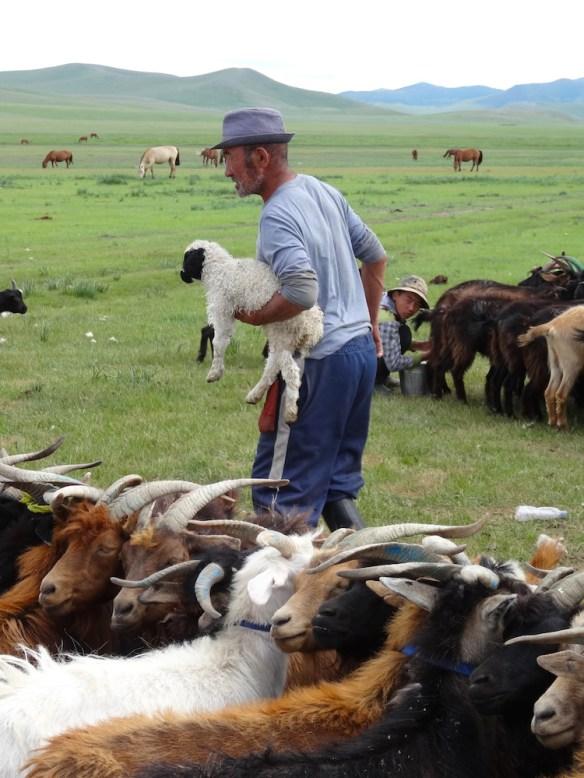 herders mongolia