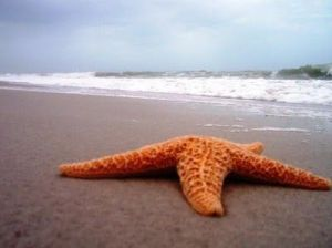 star fish in the sea